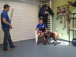 belgian shepherd for sale in malaysia dog training