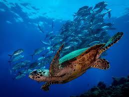 dive sight