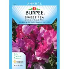 burpee sweet pea summer love mix seed 40398 the home depot