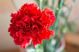 symbolism of flowers in art aleteia