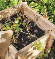 Container Gardening Potatoes - how to build your own potato growing box diy gardening save