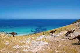 five days on kangaroo island