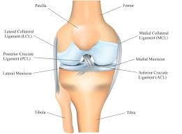Lateral Collateral Ligament Ankle Knee Anatomy
