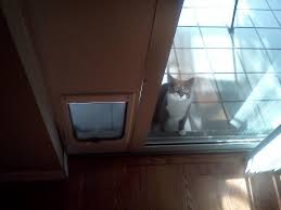 she hasn u0027t quite mastered the concept of a cat door yet imgur