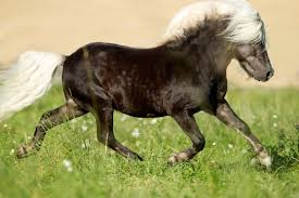 Black Mustang Horse Pictures Real Horse Colors And Equine Color Genetics