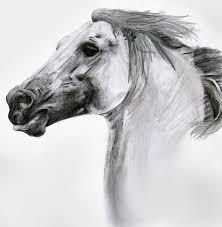 horse pencil sketch by doublevixen on deviantart
