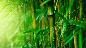 sorte de bambou quelles sont les différentes fibres textiles