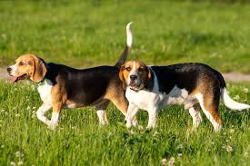 top breeds and names of dogs in virginia beach wtkr com