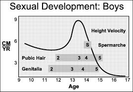 early young male pubic hair growth pictures physiologic growth and development during adolescence articles