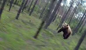fact check bear chases biker through woods