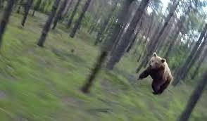 Running Bear Meme - fact check bear chases biker through woods