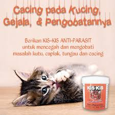 Obat Cacing Kucing Di Petshop cacing pada kucing gejala pengobatannya raja petshop