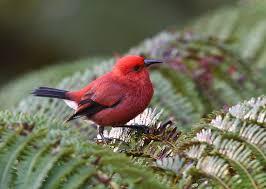 Hawaii Birds images Hawaiian birds 25 photos in the united states jpg