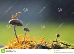 ant stock photos images u0026 pictures 15 210 images