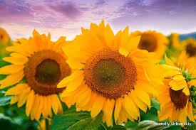 flower pro anatoliy urbanskiy