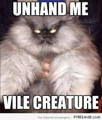 Evil Cat Meme - 11 evil cat meme pmslweb