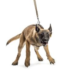 leash aggression victoria stilwell positively