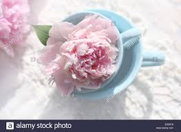 The Pink Peonies by Light Pink Peonies Stock Photos U0026 Light Pink Peonies Stock Images