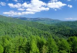 North Carolina forest images National forests in north carolina nantahala national forest jpg