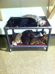 Bunk Bed For Dogs Bunk Bed Beds Customer Reviews Bed With Shade Cover