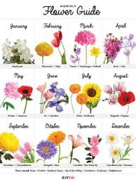 flowers of the month birth month flowers pinteres