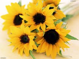 bouquet of sunflowers a bouquet of sunflowers hd wallpaper
