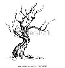 handsketched illustration old crooked tree dry stock vector