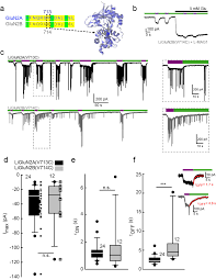 a family of photoswitchable nmda receptors elife lens