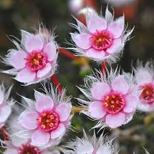 Pictures Of Beautiful Flowers In The World - best 25 rare flowers ideas only on pinterest unusual flowers