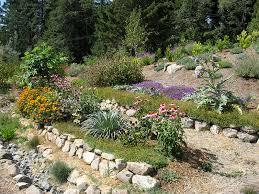amazing drought tolerant landscape garden beautiful drought
