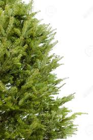real bare christmas tree border isolated on white background stock