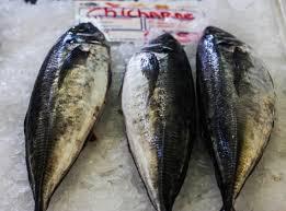 mercado da ribeira lisbon the fish market myweku tastes