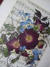 Drying Flowers In Books - 70 best f l o w e r s images on pinterest flower botany and