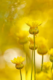 Color Yellow 153 Best White And Yellow Images On Pinterest Yellow