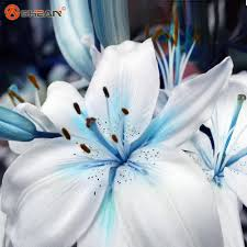 Cheap Flower Seeds - specials blue heart lily plant seeds potted bonsai plant lily