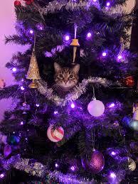 Cat Climbing Christmas Tree Video Tis The Season For Xmas Tree Climbing Album On Imgur