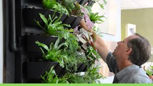 living air green walls active planting system youtube