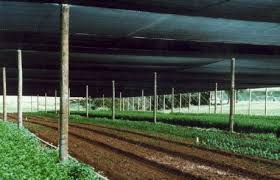 Shade Cloth Protecting Your Plants by Monofilament Shade Cloth Covershade By Polyfab Usa