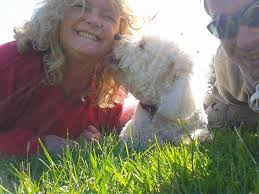 bichon frise good and bad 17 reason the bichon frise is the best dog breed
