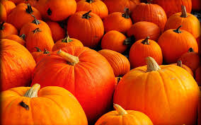 free halloween orange background pumpkin pumpkins wallpapers for desktop group 67