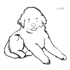 coloring pages of dogs and puppies new coloring page newfoundland