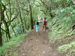 Iao Valley State Park Map by Makiki Valley Loop Trail Offers Cool Green Escape To Honolulu