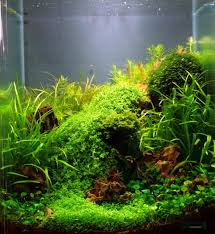 Planted Aquarium Aquascaping Jan Simon Knispel And Aquascaping Aqua Rebell