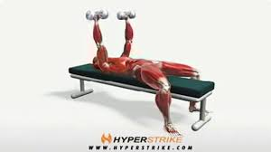 Flat Bench Db Fly Workout Manager Dumbbell Bench Press Chest Exercises