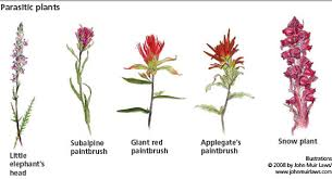 Flowers Information - common wildflowers yosemite national park u s national park