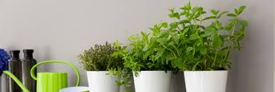 herb pots for windowsill fresh garden herbs from the window sill u2013 emsa