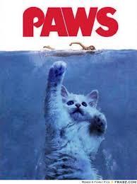 Meme Poster Generator - jaws movie poster kitten attacking woman paws meme