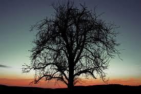 black tree by vanilla chihuahua on deviantart