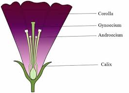 Part Of Flowers - 4 plant reproductive systems plantbreeding