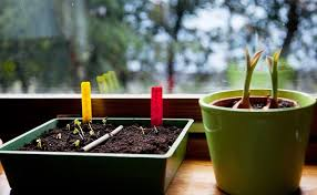 growing plants indoors with artificial light your plants getting enough light